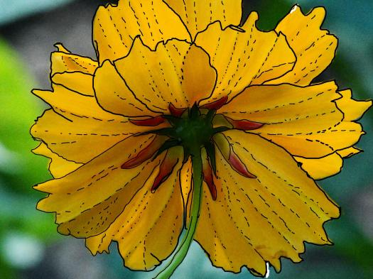 Yellow Flower Outlined