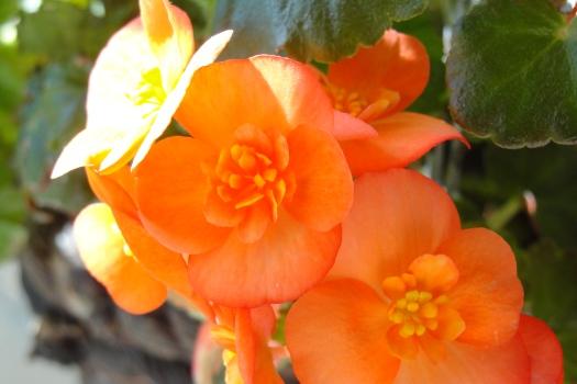 Wow Orange