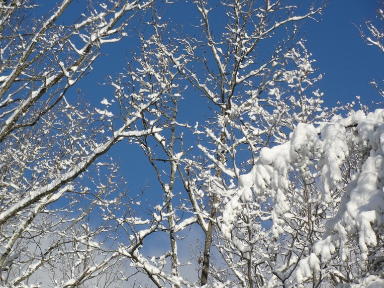 Winter Color Combination