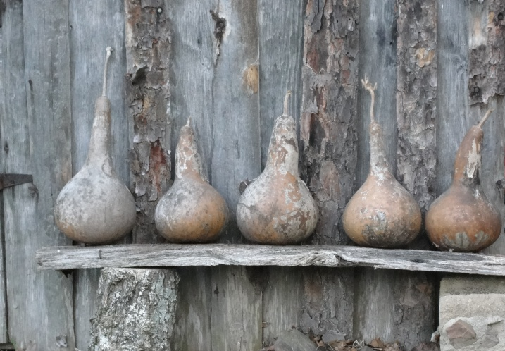 Gourds in a Row.....(c )2012, Joni Beach.