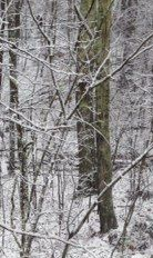 photo (3)WinterStreamA