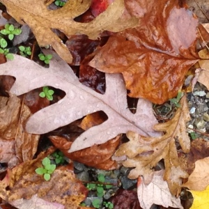 photoFallLeaves1